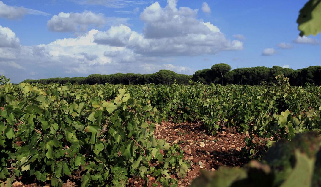 Las Denominaciones de Origen de Castilla-La Mancha